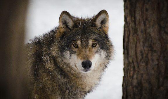 SlovakWildlife org - Slovak Wildlife Society